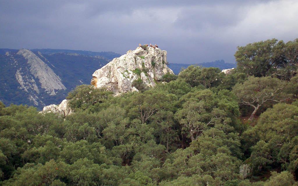 Si buscas qué ver en Cádiz provincia en una semana, el Parque Natural de los Alcornocales, es parada obligatoria.