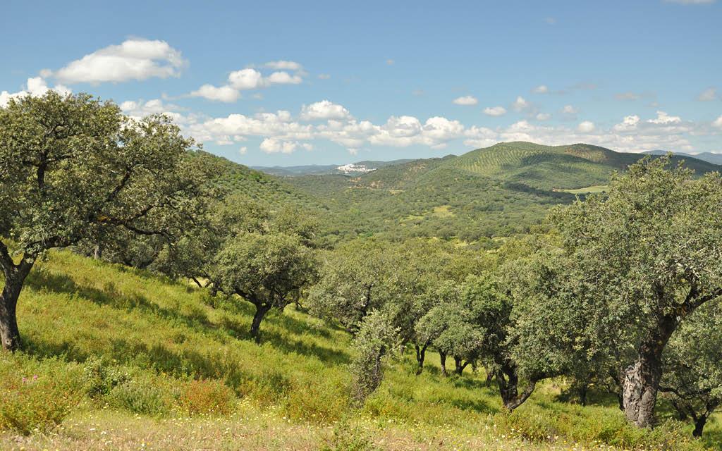 Qué visitar en Andalucía en invierno: Sierra de Aracena